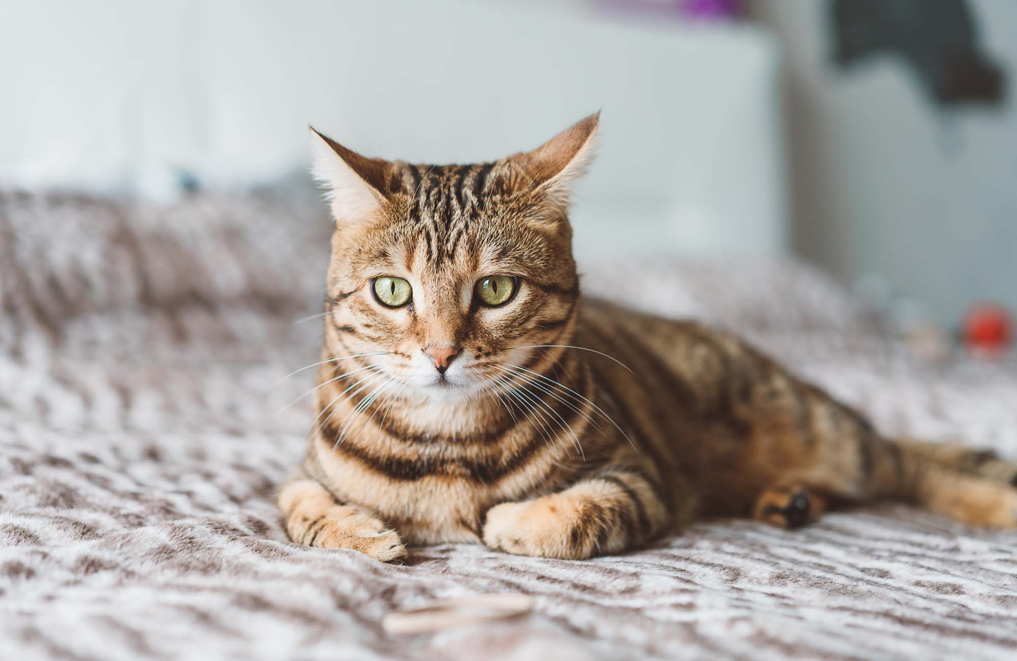 Cat relaxing on a bed